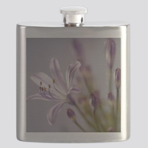 Agapanthus 'Donau' Flask