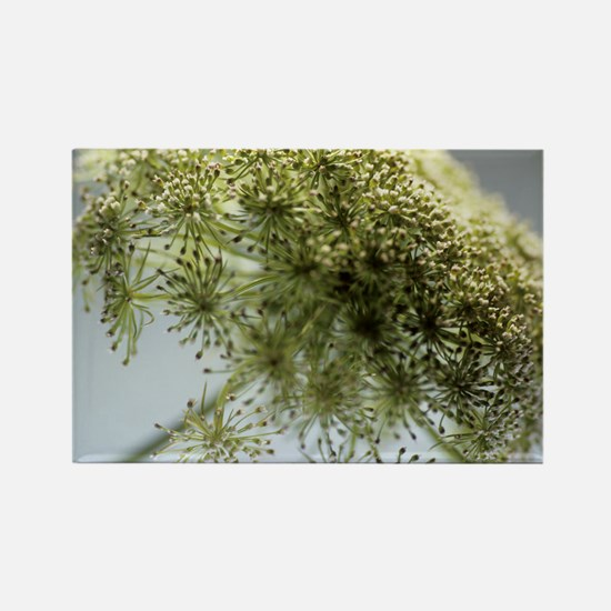 Dill (Anethum graveolens) Rectangle Magnet