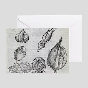 Foetal plants, 16th century artwork Greeting Card