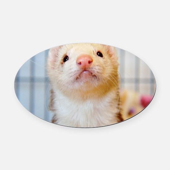 Silly Ferret Oval Car Magnet
