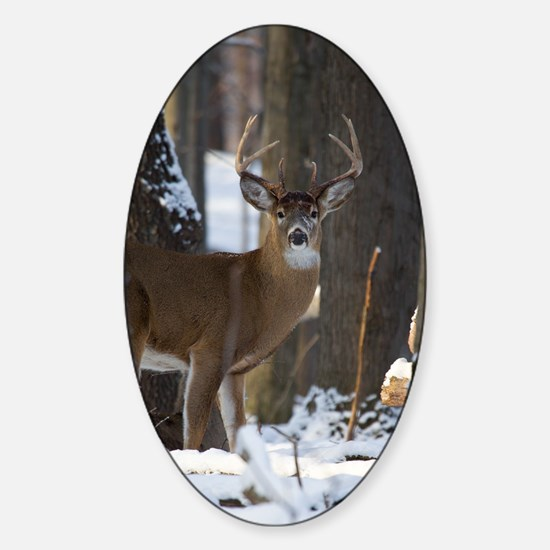 Trophy Whitetail D1316-014 Sticker (Oval)