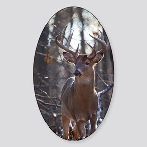 Dominant Buck D1342-025 Sticker (Oval)