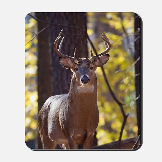 Buck Deer D1312-048 Mousepad