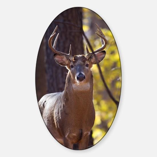Buck Deer D1312-048 Sticker (Oval)