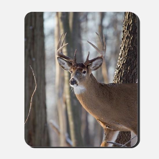 Buck Deer D1316-053 Mousepad