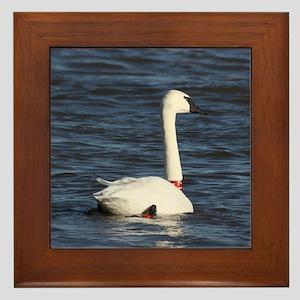 Trumpeter Swan, Framed Tile