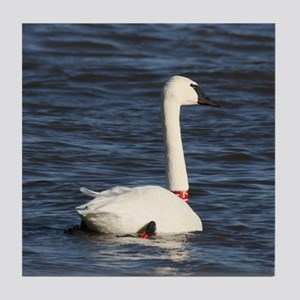 Trumpeter Swan, Tile Coaster