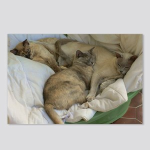Burmese Cats asleep Postcards (Package of 8)