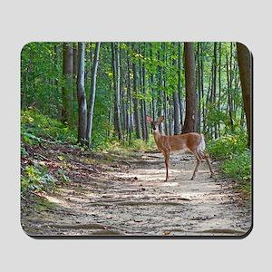 Beautiful doe in forest Mousepad