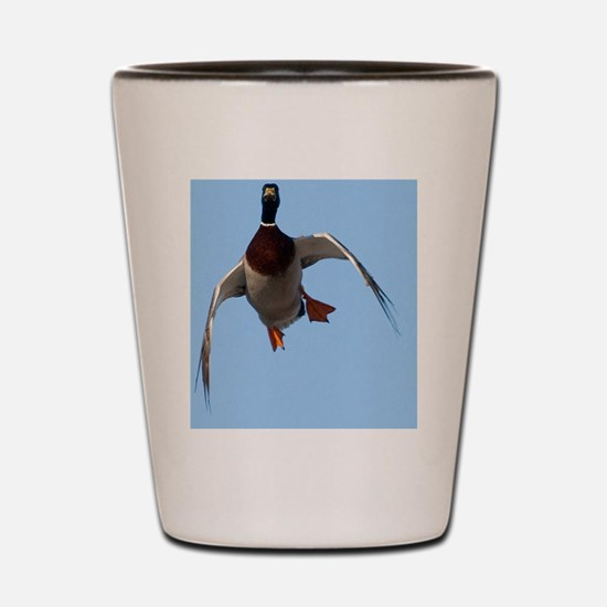 Duck, Cupped Wings D1232-099 Shot Glass