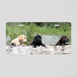3 Lab pups Aluminum License Plate