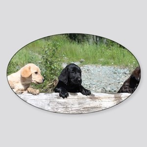 3 Lab pups Sticker (Oval)