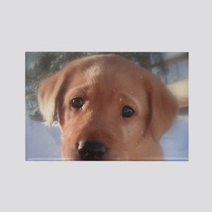 Yellow Lab puppy Rectangle Magnet