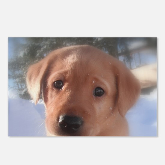 Yellow Lab puppy Postcards (Package of 8)