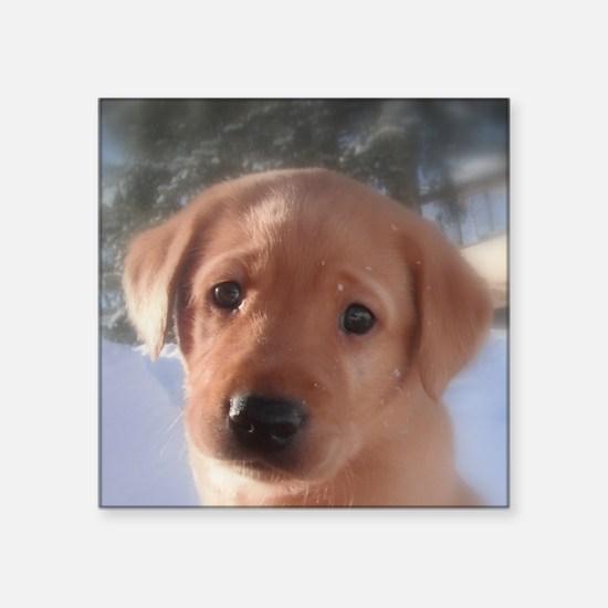 "Yellow Lab puppy Square Sticker 3"" x 3"""
