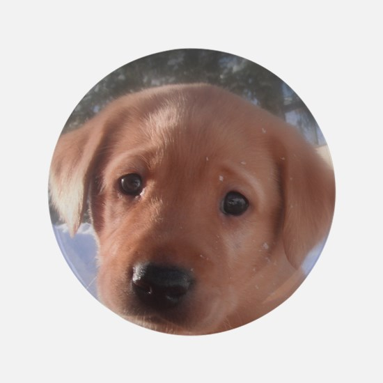 "Yellow Lab puppy 3.5"" Button"