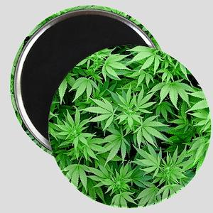 Marijuana Magnet
