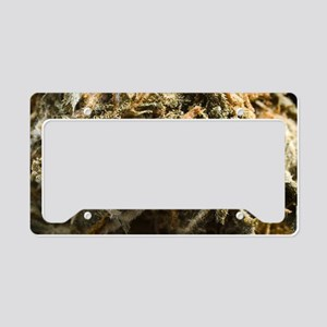 Marijuana Bud License Plate Holder