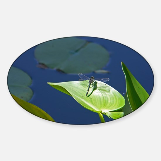 Dragonfly Sticker (Oval)