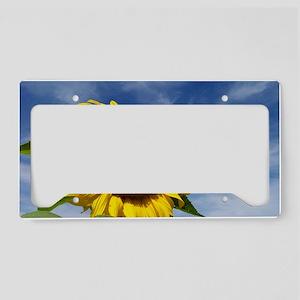 Sunflower Reaching for the Sk License Plate Holder