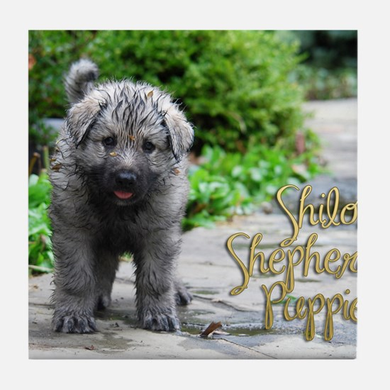 2013 Shiloh Pupppy Tile Coaster