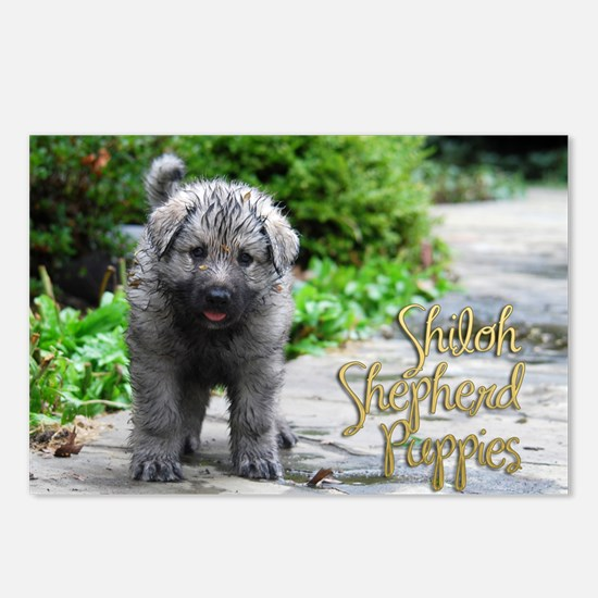 2013 Shiloh Pupppy Postcards (Package of 8)