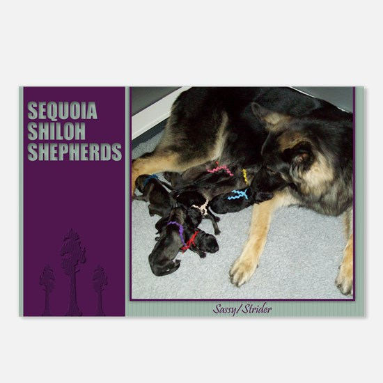 2013 Sequoia Shilohs Postcards (Package of 8)