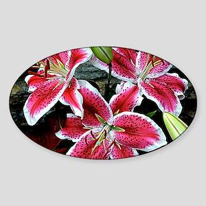 Lilly Explosion Sticker (Oval)