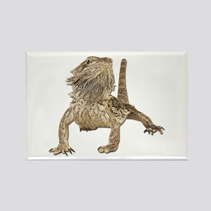 Bearded Dragon Photo Rectangle Magnet