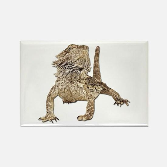 Bearded Dragon Photo Rectangle Magnet