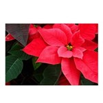 Holiday Poinsettia Postcards (Package of 8)