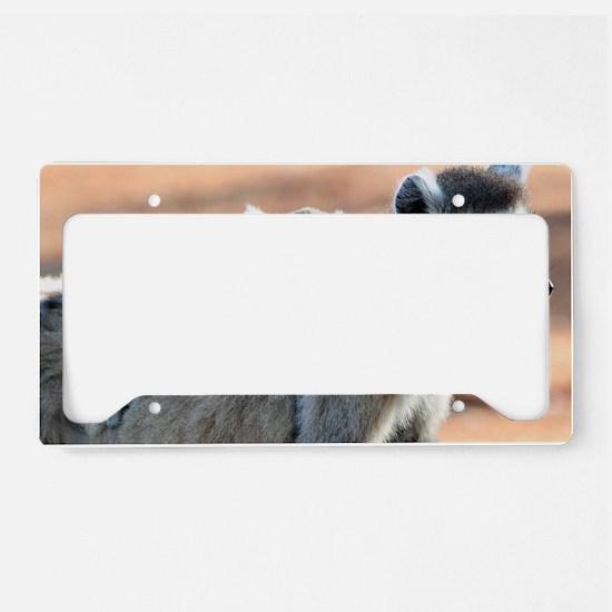 Ring Tailed Lemurs License Plate Holder