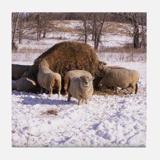 Ewes Very Fluffy! Tile Coaster