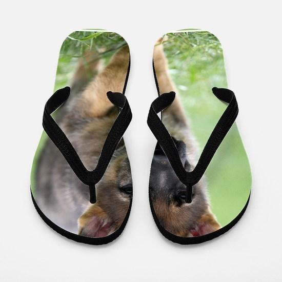 German Shepherd dog puppy Flip Flops
