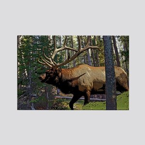 Bull elk in pines 5 Rectangle Magnet