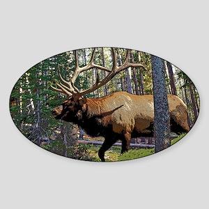 Bull elk in pines 5 Sticker (Oval)
