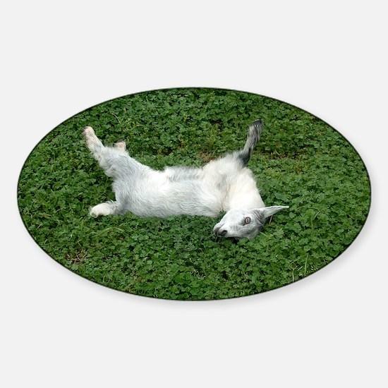 fainting goat Sticker (Oval)