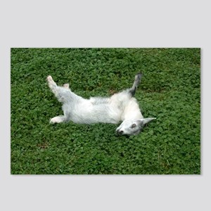 fainting goat Postcards (Package of 8)