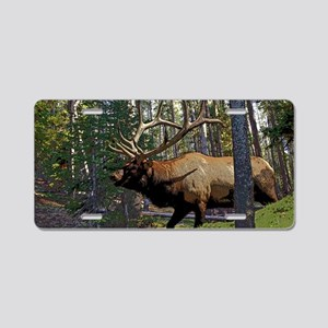 Bull elk in pines 6 Aluminum License Plate