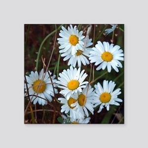 "Shasta Daisies Square Sticker 3"" x 3"""