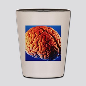 Human brain Shot Glass
