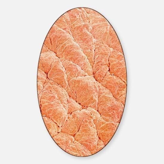 Human skin, SEM Sticker (Oval)