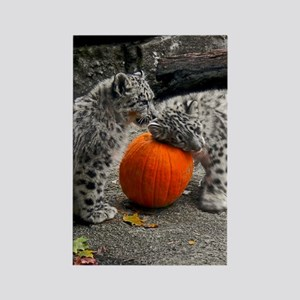 Snow Leopards and Pumpkin Rectangle Magnet