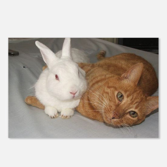 Bunny_Cat Postcards (Package of 8)