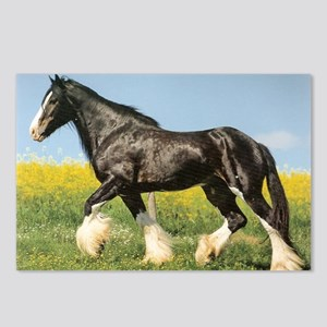Shire Horse Postcards (Package of 8)