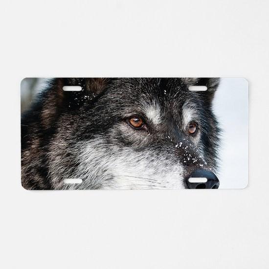 Beautiful Grey Wolf Aluminum License Plate