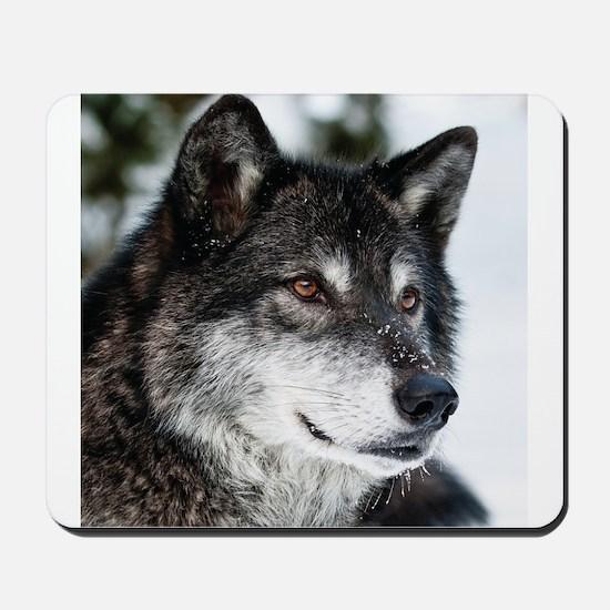 Beautiful Grey Wolf Mousepad