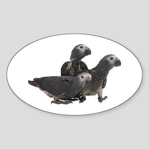 African Gray Parrot Babies Oval Sticker