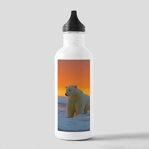Polar Bear Sports Water Bottle