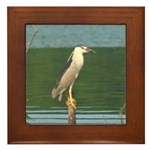 Black-crowned Night Heron Framed Tile